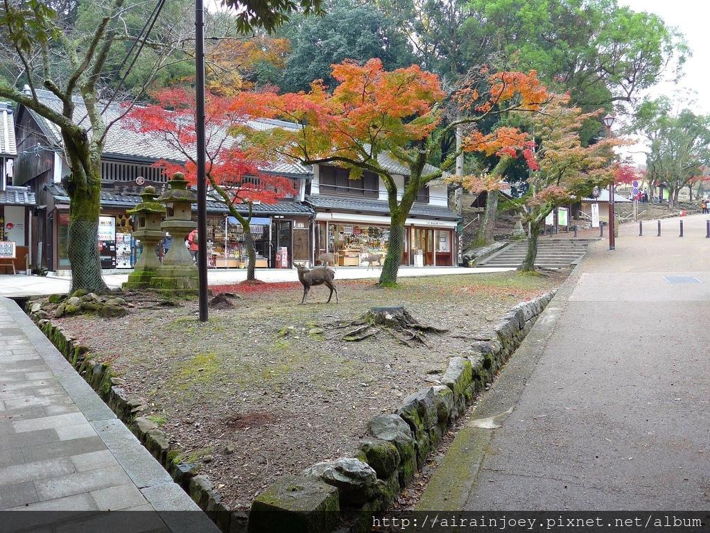 D03-228-奈良公園.jpg