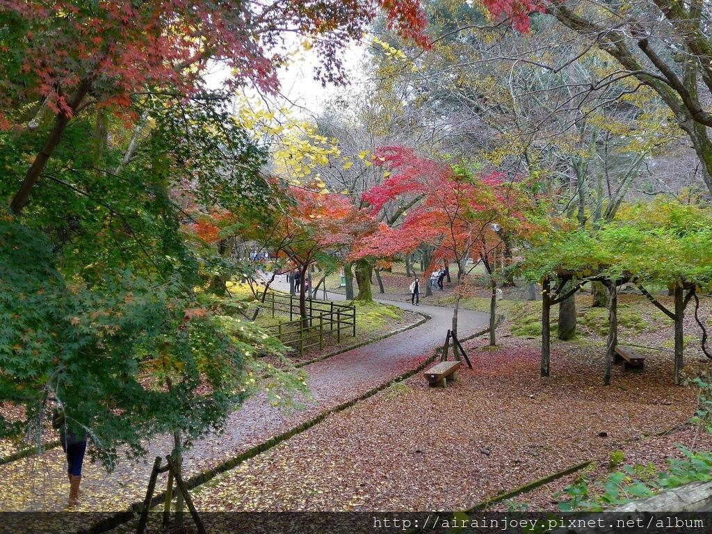 D03-221-奈良公園.jpg