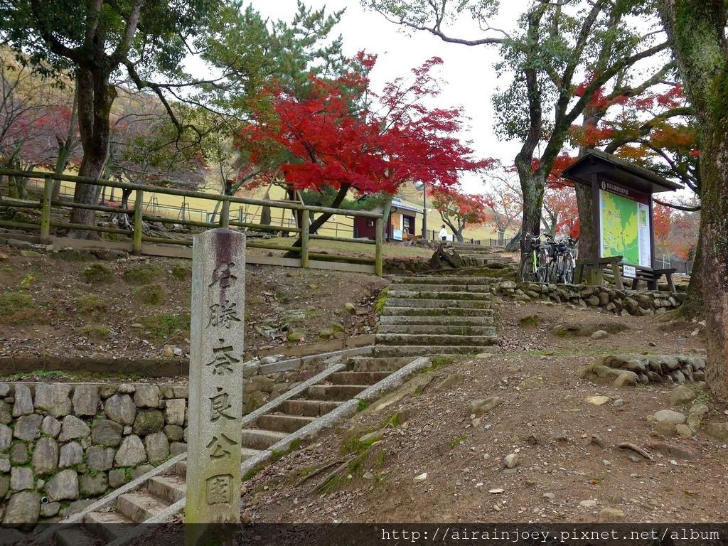 D03-232-奈良公園.jpg