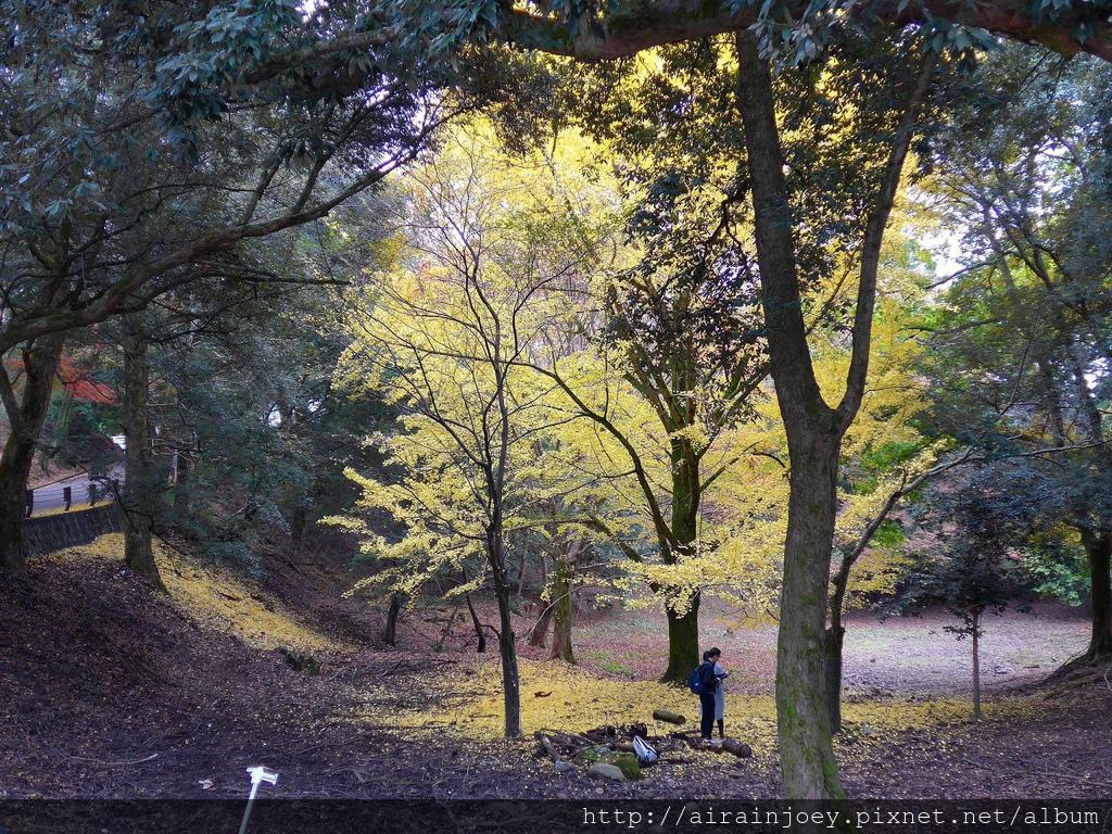 D03-231-奈良公園.jpg