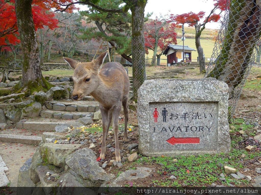 D03-233-奈良公園.jpg