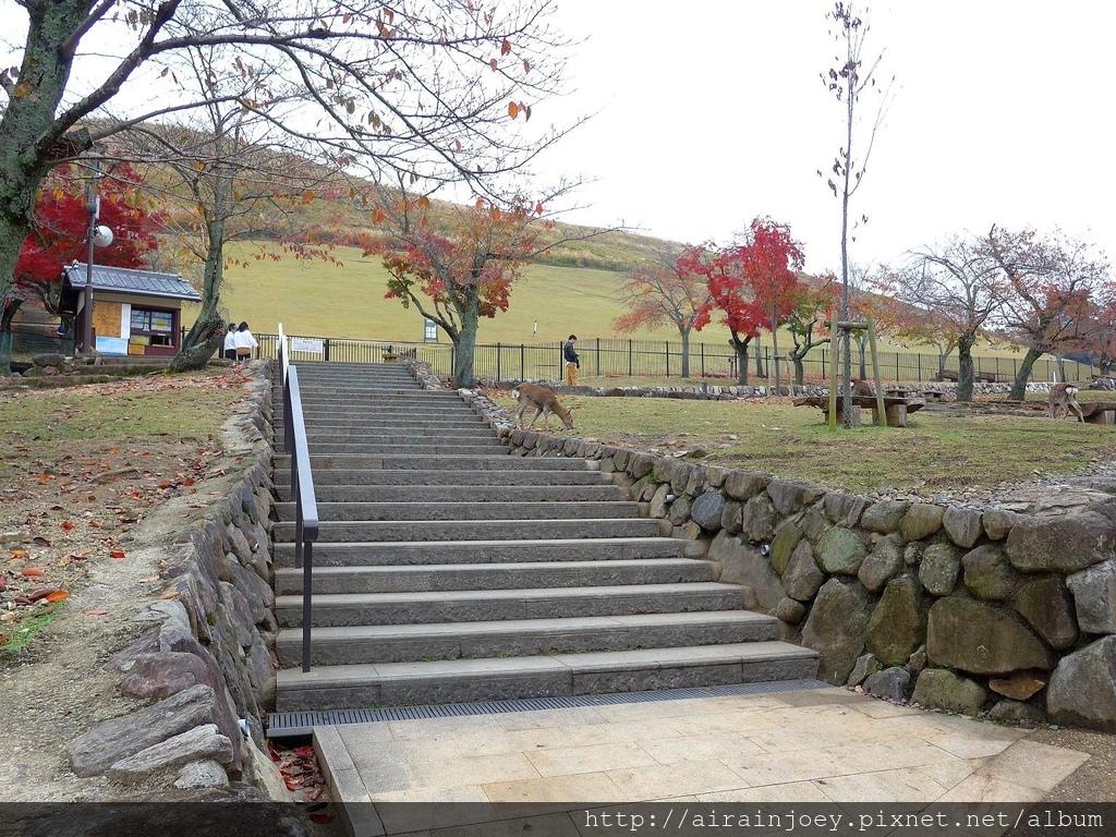 D03-235-奈良公園.jpg