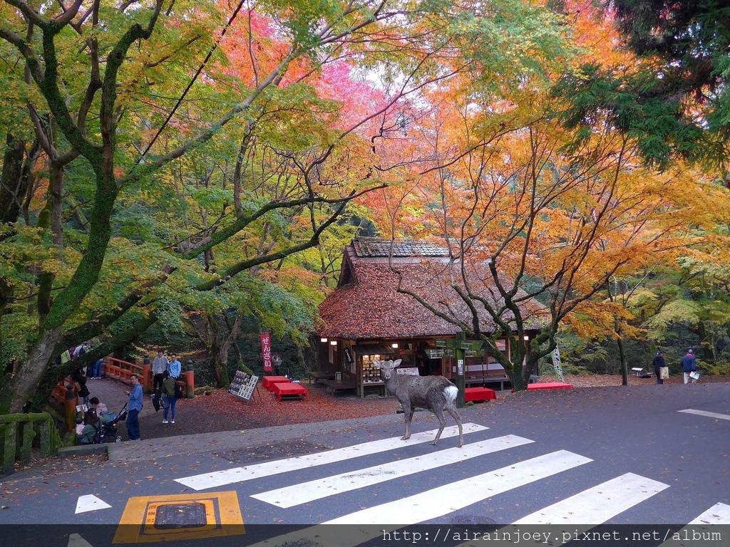 D03-253-奈良公園.jpg