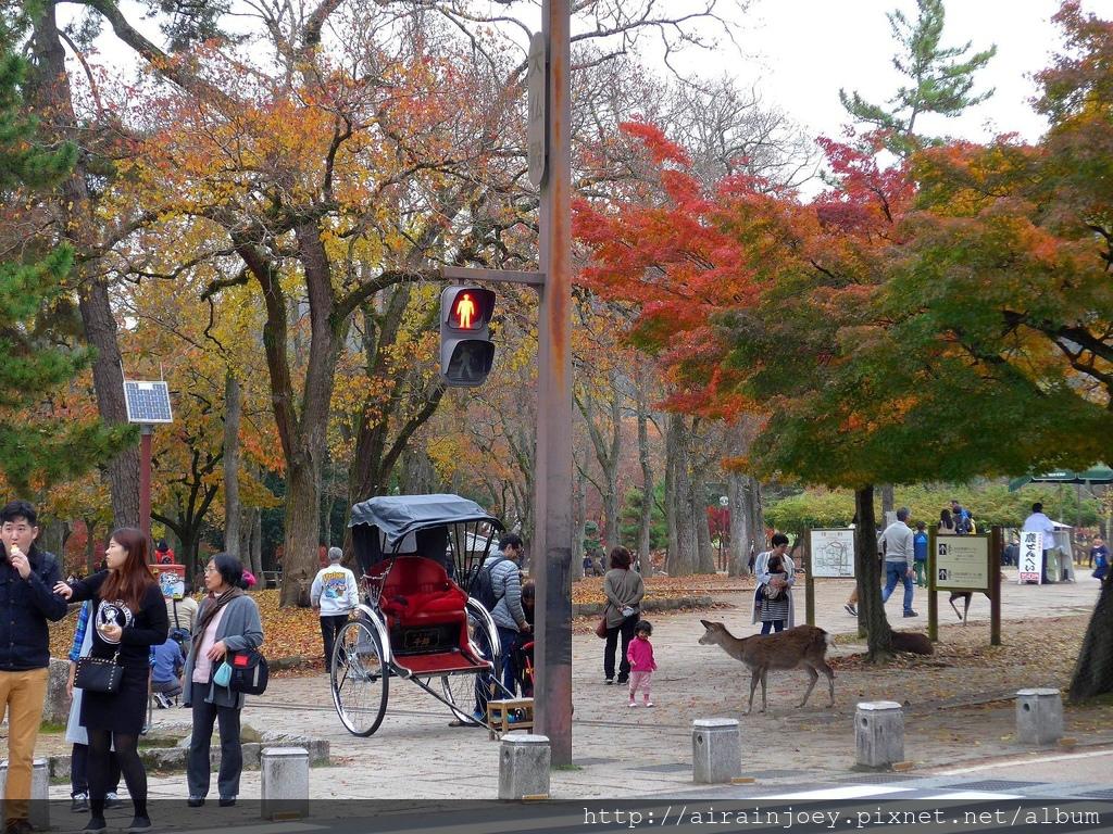 D03-329-奈良公園.jpg