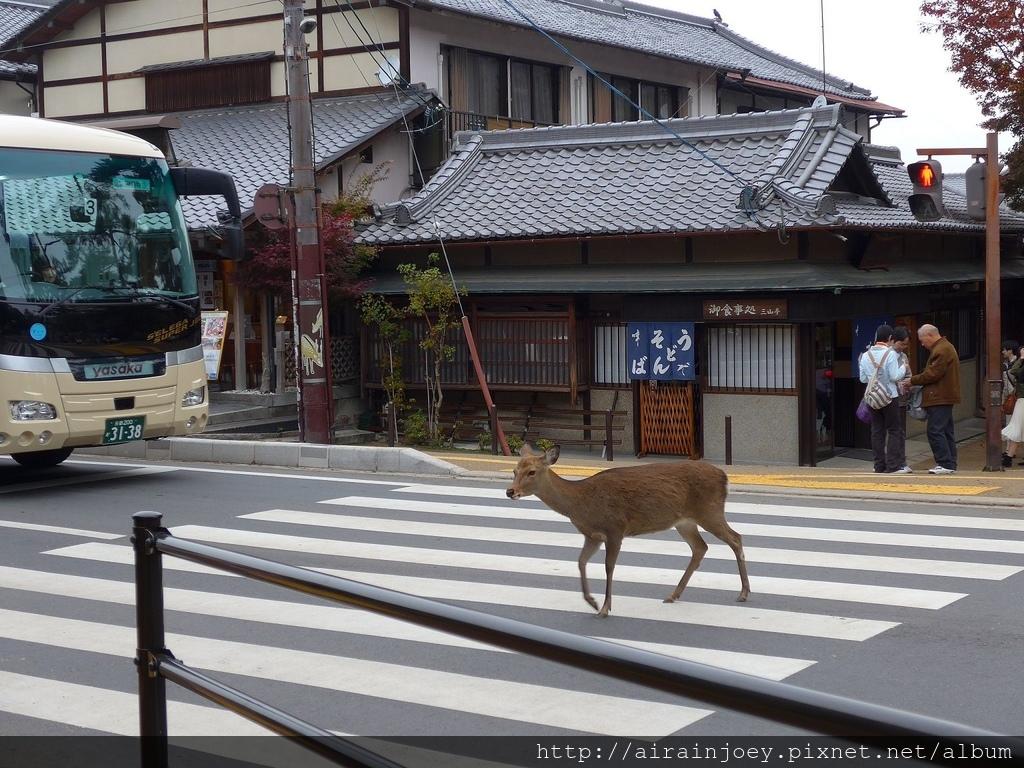D03-332-奈良公園.jpg
