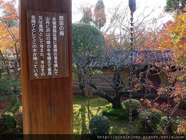 D04-311-永觀堂.jpg