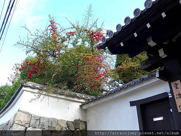 D06-170-東福寺.jpg