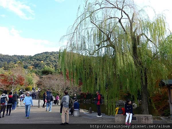 D06-262-圓山公園.jpg