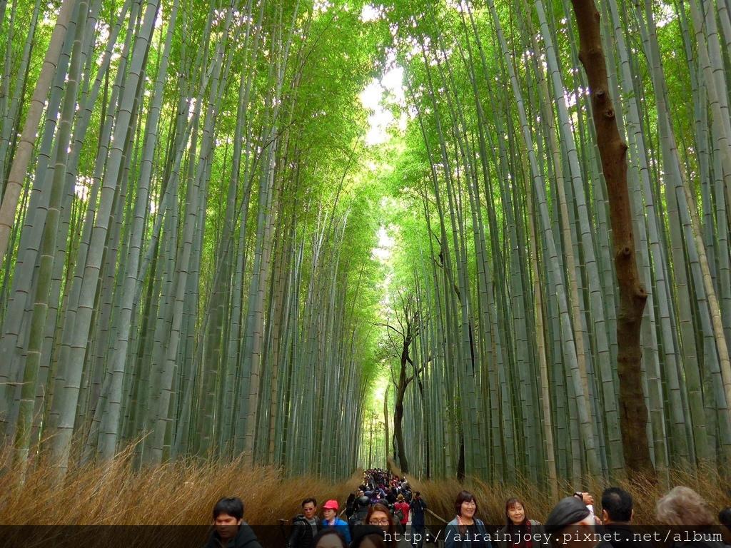 D07-134-嵐山竹林.jpg