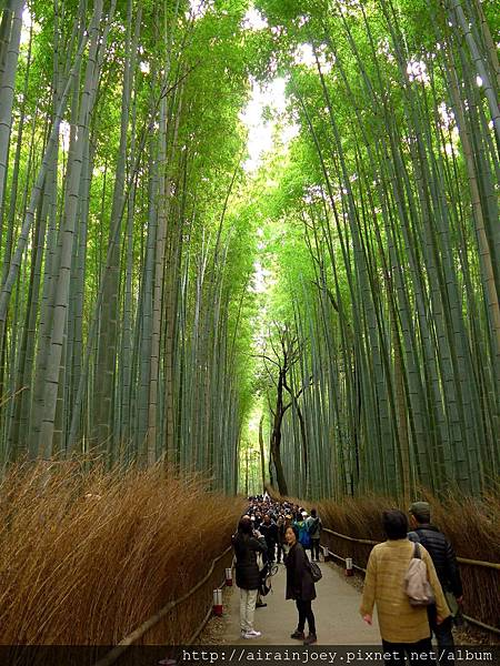 D07-143-嵐山竹林.jpg