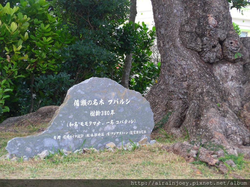 D03-076 備瀨福木林道.jpg