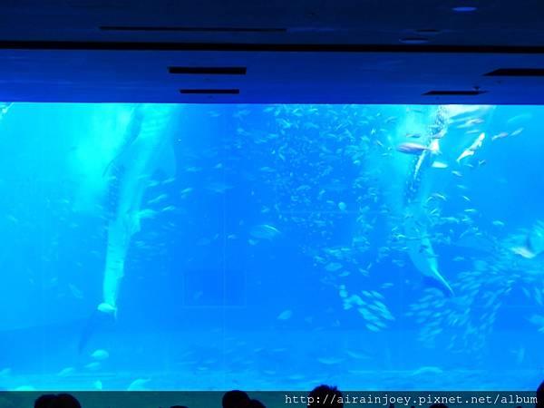 D03-199 美麗海水族館.jpg