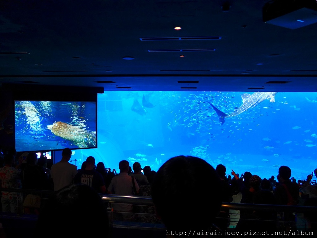 D03-198 美麗海水族館.jpg