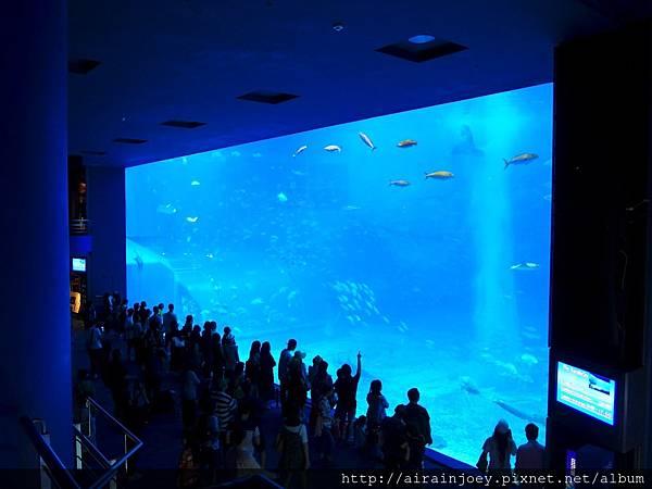 D03-201 美麗海水族館.jpg