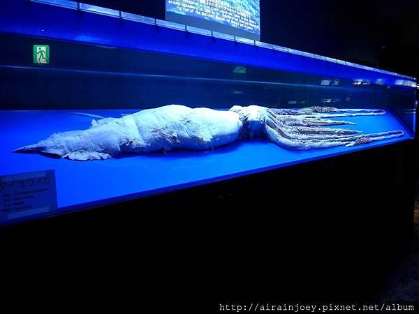 D03-216 美麗海水族館.jpg