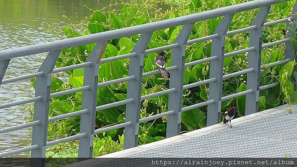 台北市-洲美蜆仔港公園-07.jpg