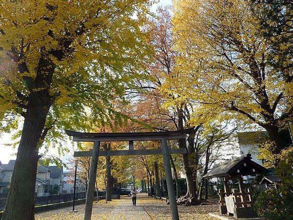 nEO_IMG_平塚神社 往下一目的地 [ 舊古河庭園] 前進途中.jpg