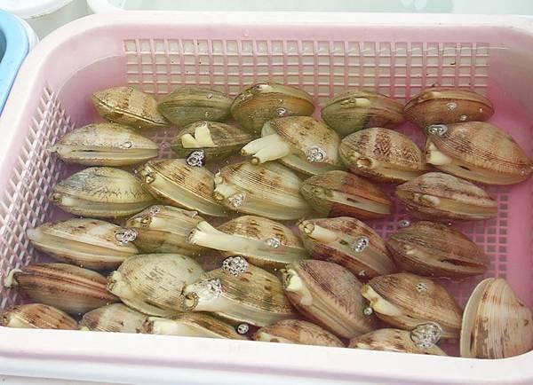 海瓜子.jpg