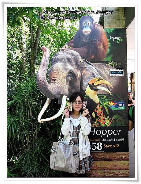 抵達新加坡動物園
