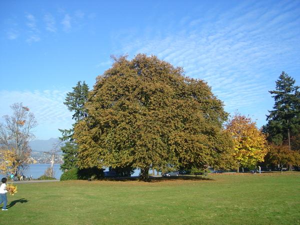 Autumn07 023.jpg