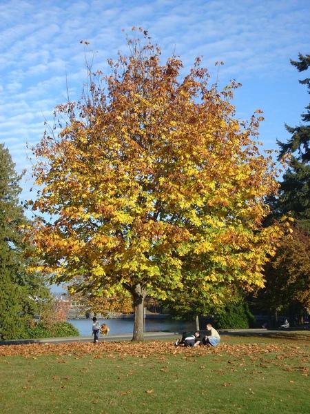 Autumn07 027.jpg