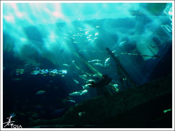 墾丁看魚趣 -5