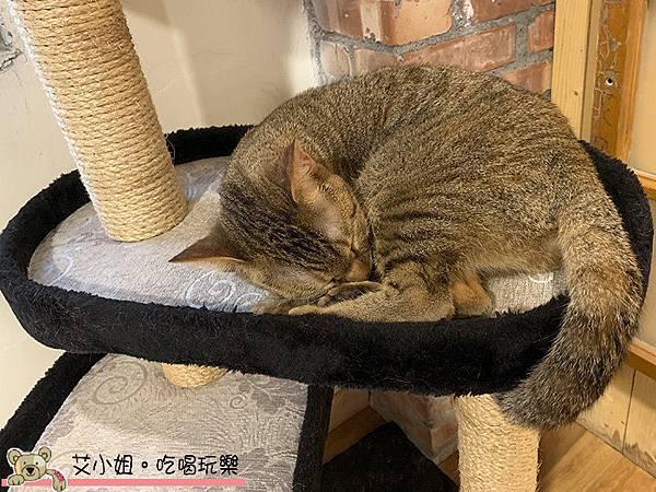 貓言貓語 14.JPG