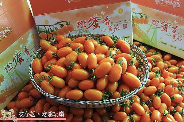 呂家番茄 1.JPG