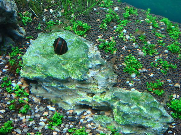 向天~~爆藻了~食藻生物的重要性