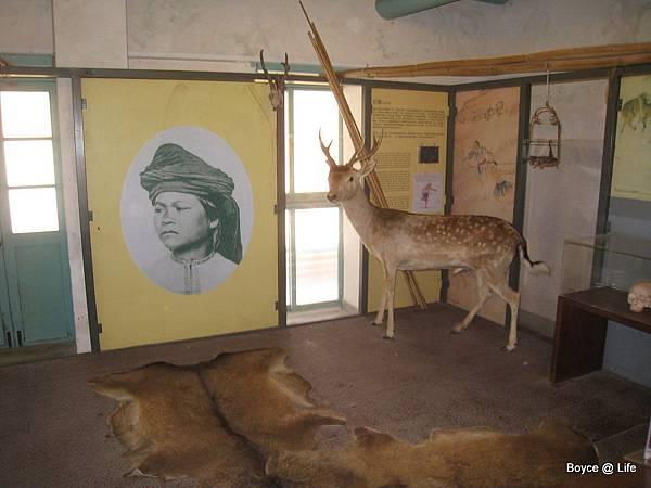早期荷蘭人發現台灣之後,開始進行打獵貿易,造成梅花鹿的滅絕.jpg