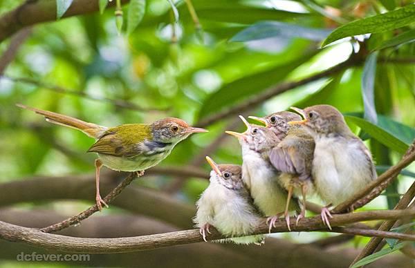 雀鸟3.jpg