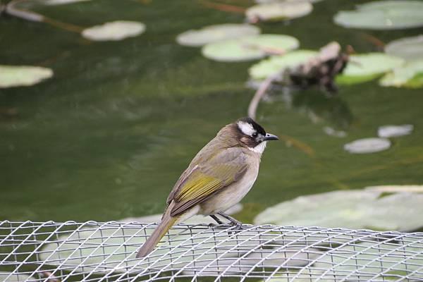 雀鸟4.JPG