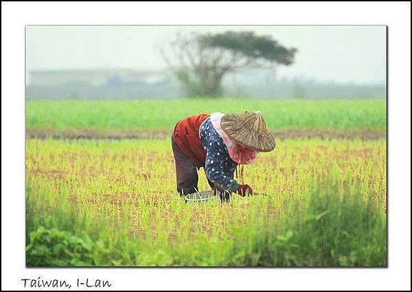 農婦.jpg
