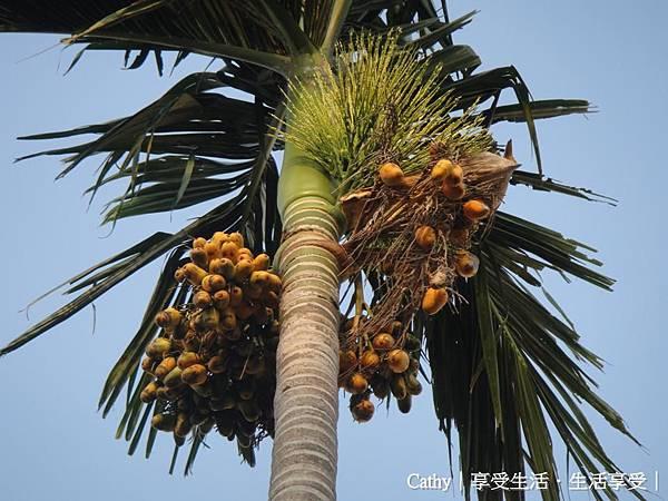 檳榔樹 2.jpg