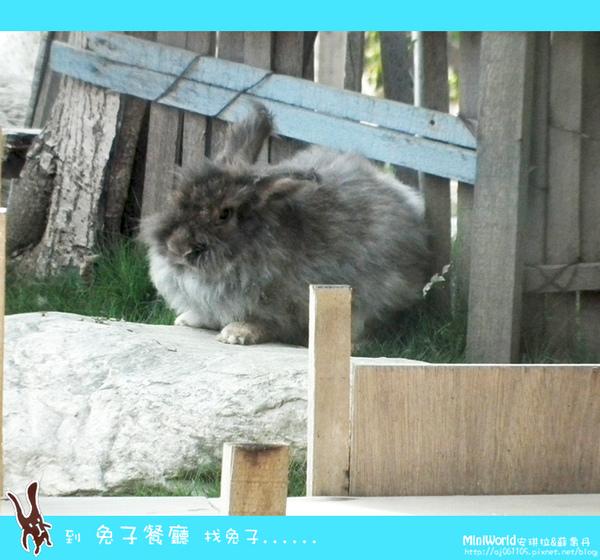 rabbit10.jpg