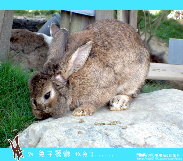 rabbit8.jpg