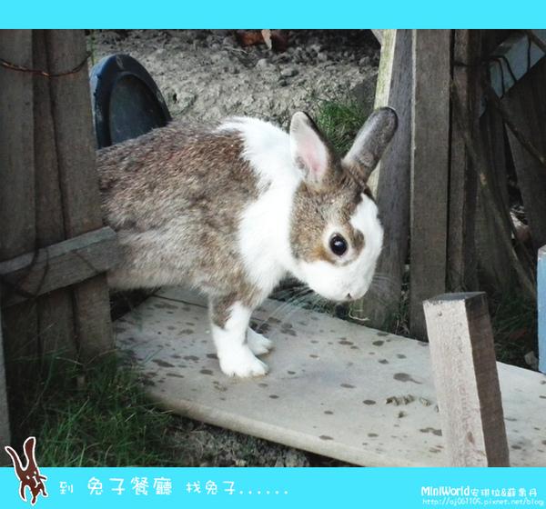 rabbit9.jpg