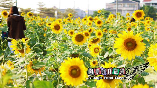 11向日葵.JPG