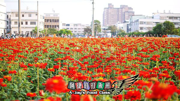 21紅花.JPG