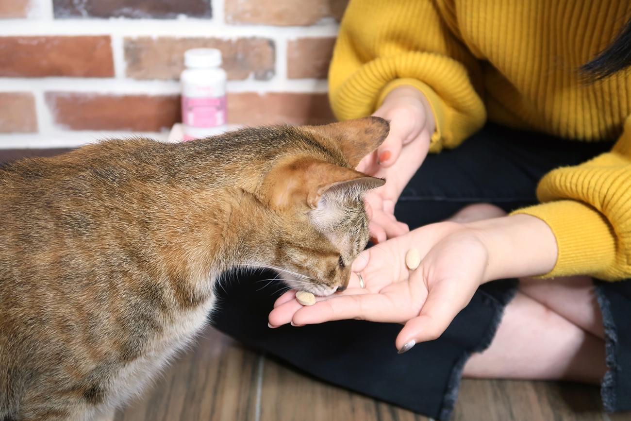 PS BUBU DOG %26;amp; CAT 超級黑酵母-極上的38種-寵物保健食品 (5).JPG