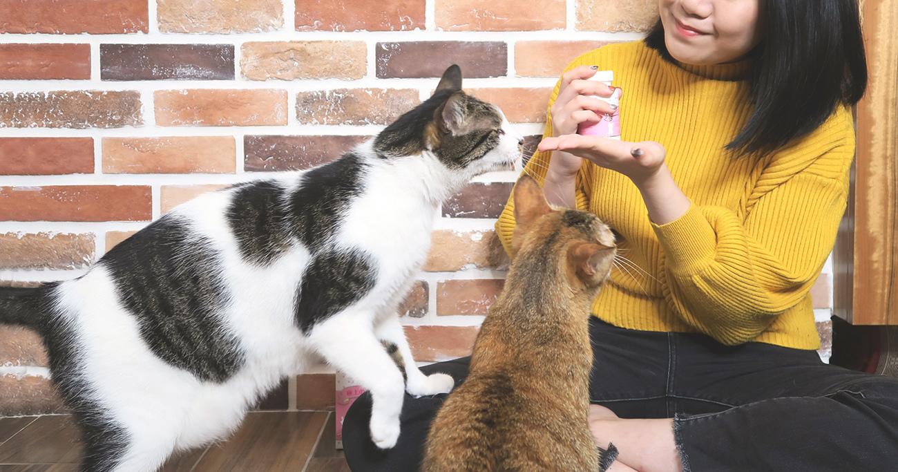 PS BUBU DOG %26;amp; CAT 超級黑酵母-極上的38種-寵物保健食品 (1).JPG