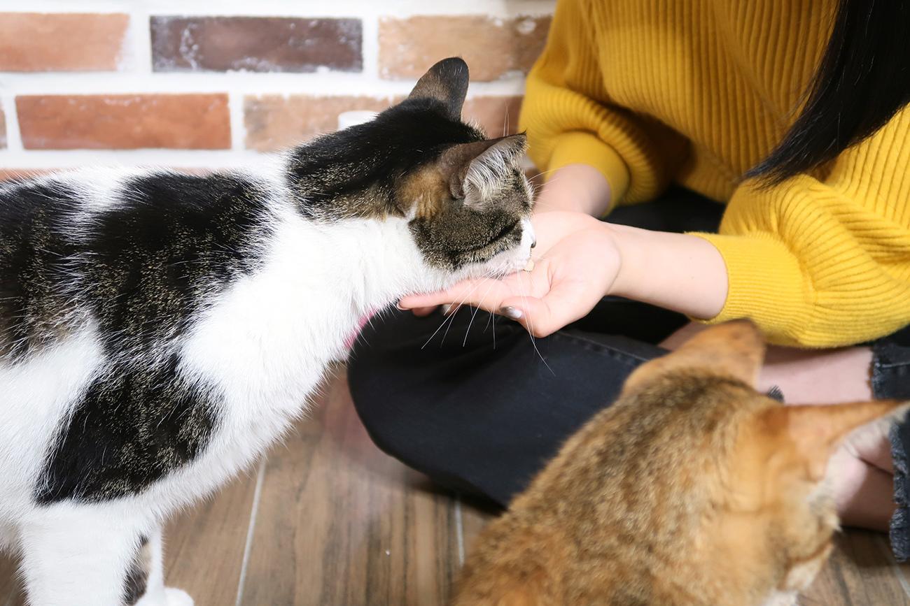 PS BUBU DOG %26;amp; CAT 超級黑酵母-極上的38種-寵物保健食品 (6).JPG