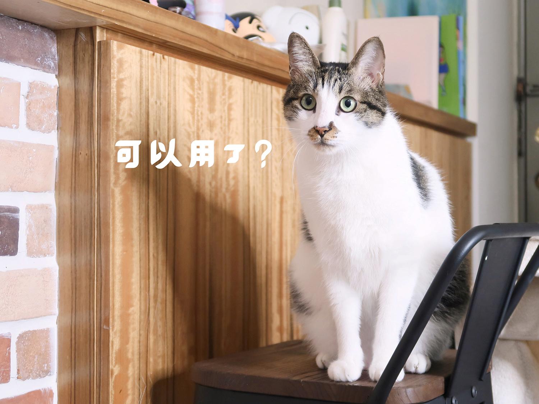 毛好多 雪玉豆腐貓砂 貓砂推薦 (11).jpg