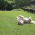 有大草皮可以讓妮妮嚕的很開心