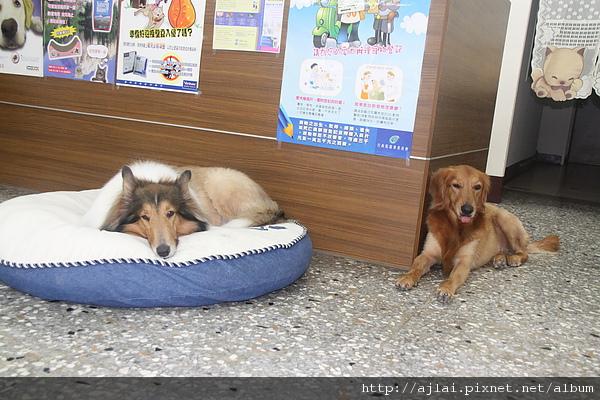 只有一張床,看誰先搶到!
