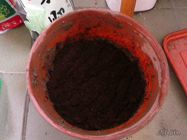 巨鷲玉栽種-4置入二分之一泥土