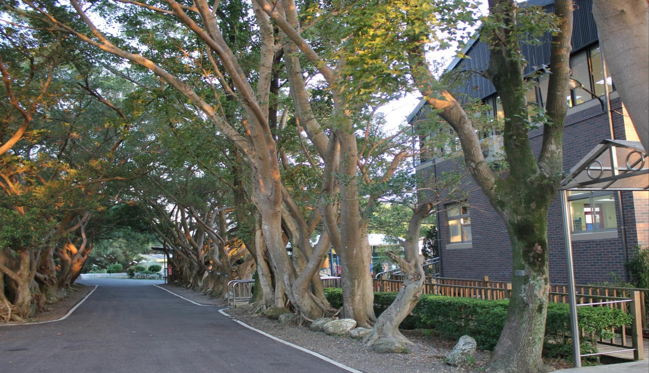 台北復臨美國學校 TAAS - 隱身山林的美麗中小學 - 國際學校|私立高中|外僑學校|申請大學|美國學校|XL ACADEMY|國外留學