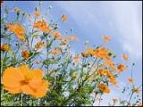 s[wall001_com]_Blue_Sky_and_Flowers_1600x1200_HM131_350A0.jpg
