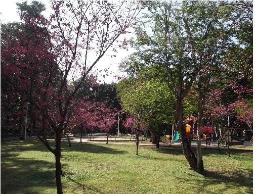 前港公園櫻花 09
