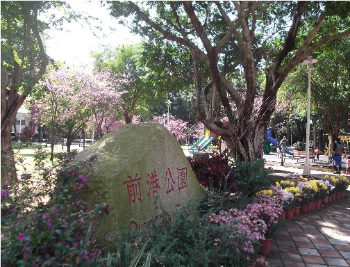 前港公園櫻花 02